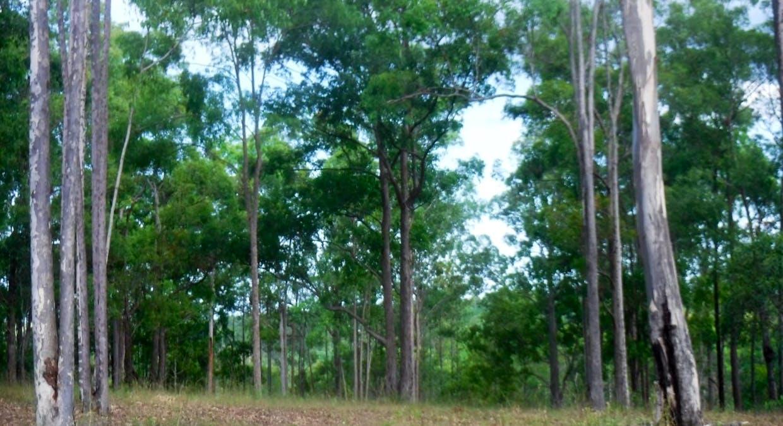 Lot 379 Arborten Road, Glenwood, QLD, 4570 - Image 16