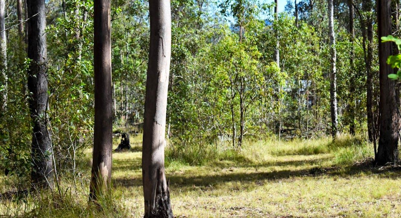 Lot 101 Deephouse Road, Bauple, QLD, 4650 - Image 5