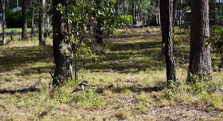 Lot 101 Deephouse Road, Bauple, QLD, 4650 - Image 7