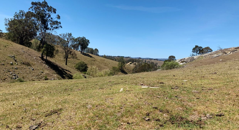258 Grosses Creek Rd, Buckajo, NSW, 2550 - Image 17