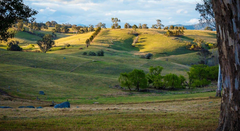 335 Angledale Rd, Angledale, NSW, 2550 - Image 41