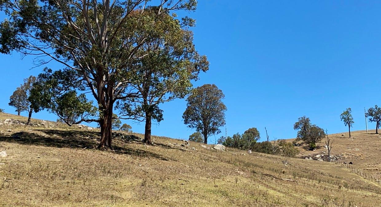 258 Grosses Creek Rd, Buckajo, NSW, 2550 - Image 21