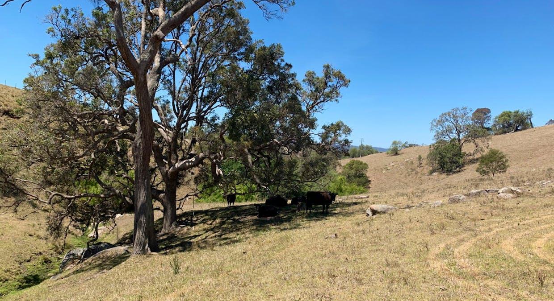 258 Grosses Creek Rd, Buckajo, NSW, 2550 - Image 22