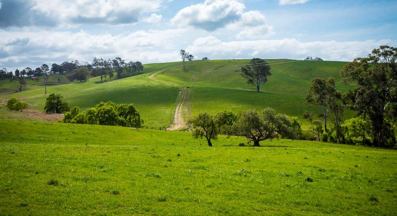 335 Angledale Rd, Angledale, NSW, 2550 - Image 37