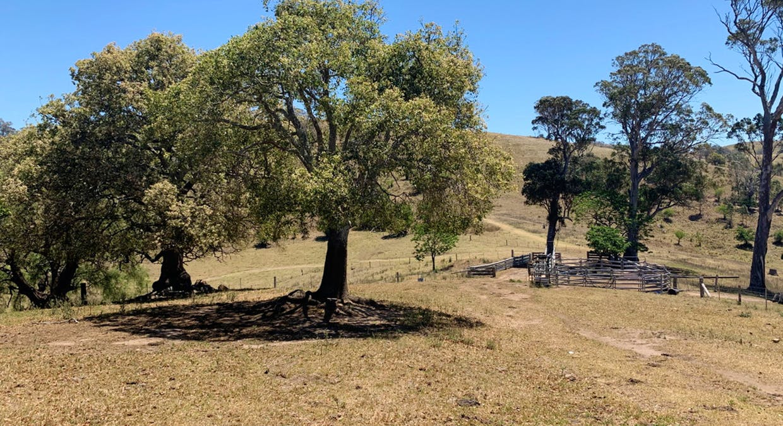 258 Grosses Creek Rd, Buckajo, NSW, 2550 - Image 7