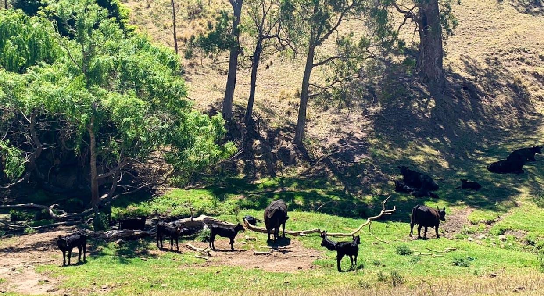 258 Grosses Creek Rd, Buckajo, NSW, 2550 - Image 19