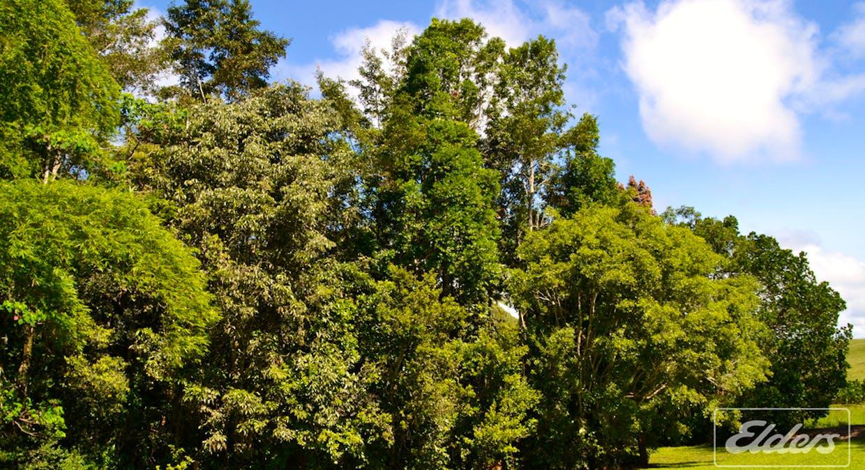 153 Merragallan Road, Malanda, QLD, 4885 - Image 11