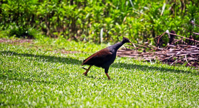 427 Hillcrest Road, Malanda, QLD, 4885 - Image 24