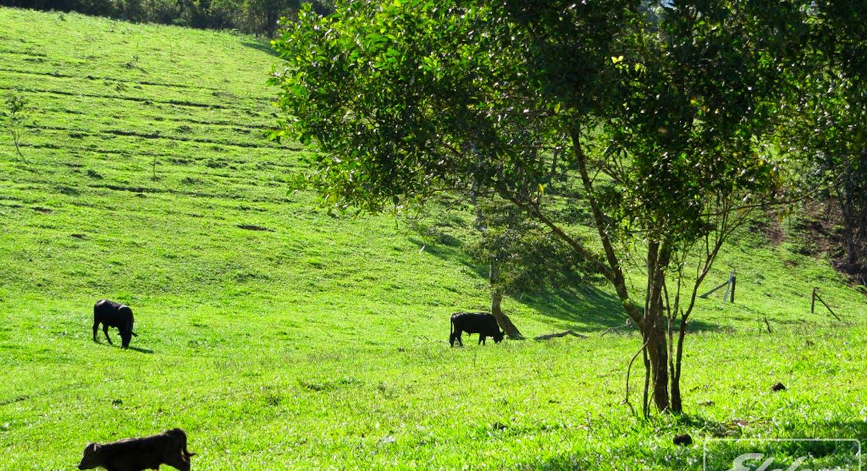 218 Old Boonjie Rd, Malanda, QLD, 4885 - Image 4