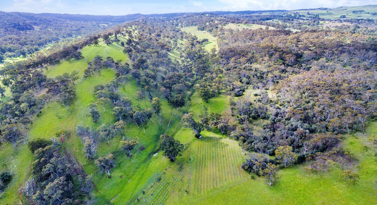 213 Sollys Hill Road, Watervale, SA, 5452 - Image 2