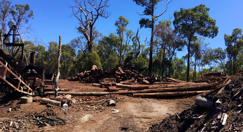 1 Rays Firewood And Logging, Argyle, WA, 6239 - Image 5