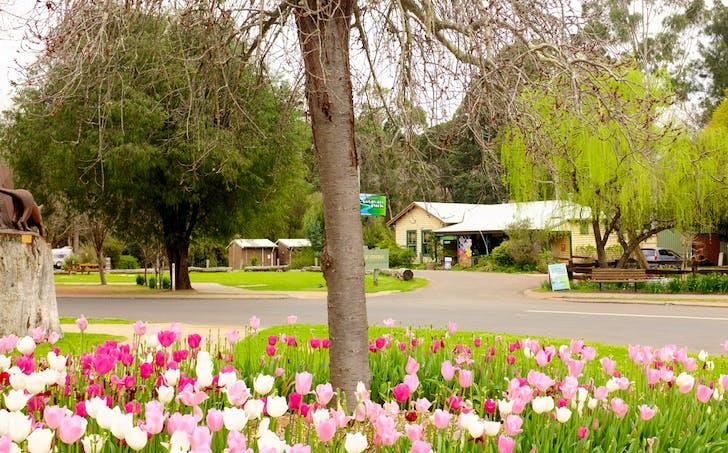 1 Nannup Blackwood River Caravan Park, Nannup, WA, 6275 - Image 1